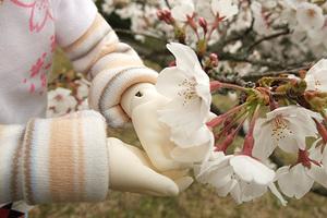 090329桜161.jpg