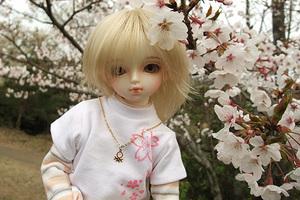 090329桜267.JPG