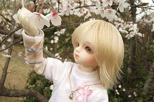 090329桜303.JPG