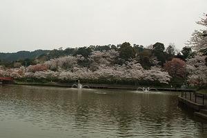 090329桜348.JPG