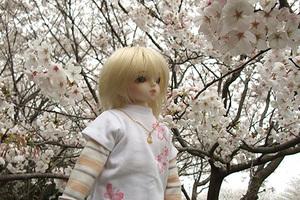 090329桜485.JPG
